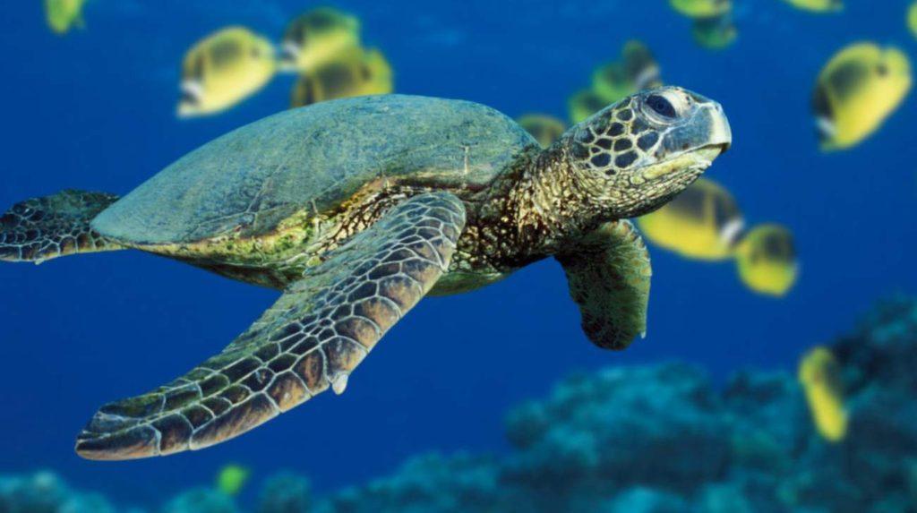 djurlivet-i-havet